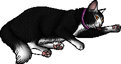 File:Webster.kittypet.png