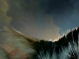 Stormfur