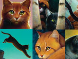 The Ultimate Guide/Gallery