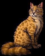File:Leopardstar.warrior.png