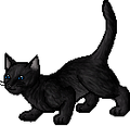 Crowfeather.apprentice.png