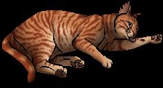 Rowanfur.kittypet