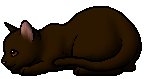 Shrewpaw (TC).kit