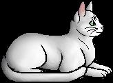 Whitetail (WC)