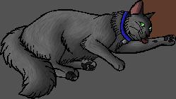 Fuzz.kittypet