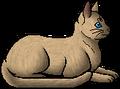 Rushtail (WC).elder