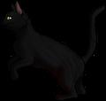 Raven Pelt.hunter