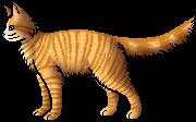 Lioneye.rogue
