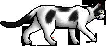 Magpie (cat)