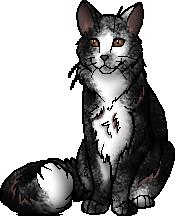 Jay (cat)