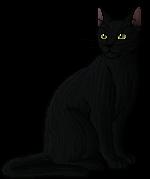 Raven Pelt.warrior
