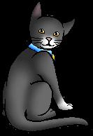 Reena (KP).kittypet