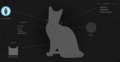 Crowfeather.Website