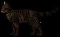 Tigerstar (TPB).rogue