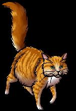 Himmelsstern | Warrior Cats Wiki | FANDOM powered by Wikia
