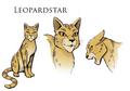 Leopardstar.concept