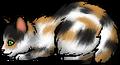 Turtle Tail.kit