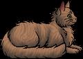 Rushtail (RC).elder