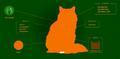 Squirrelflight.Website