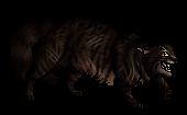 Tigerstar (TPB)