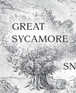 Greatsycamore