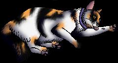 Betsy.kittypet