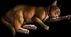 Luna.kittypet