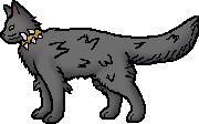 Midnight Frost Snow Leopard