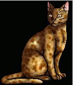Frecklewish (TC)