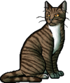 Leafpool.warrior