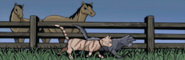 Horseplace.GA