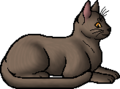 Lilywhisker.elder