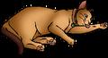Sasha.kittypet