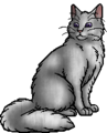 Shimmerpelt (BS).warrior