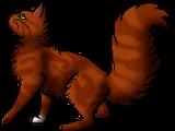 Squirrelflight/Main article