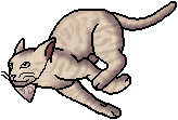 Bacon_The_Kittypet.personal.png