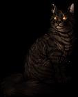 Tigerstar (TPB).warrior
