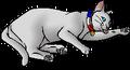 Petalnose.kittypet