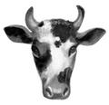 Cow.FG-1