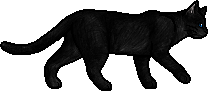 Crowfeather.loner.png