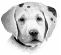 Dog.FG-1