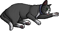 Patch (KP).kittypet