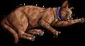 Frecklewish (SkC).kittypet