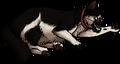Max (Ro).kittypet