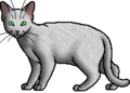 Needletail.ghost