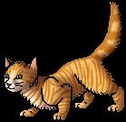 Lioneye.apprentice