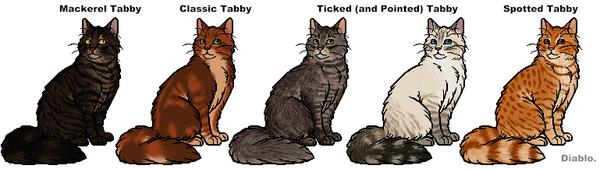 Tabby markings