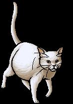 Lilyfur