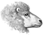 Sheep.FG-1