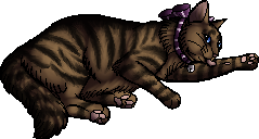 File:Cody.kittypet.png